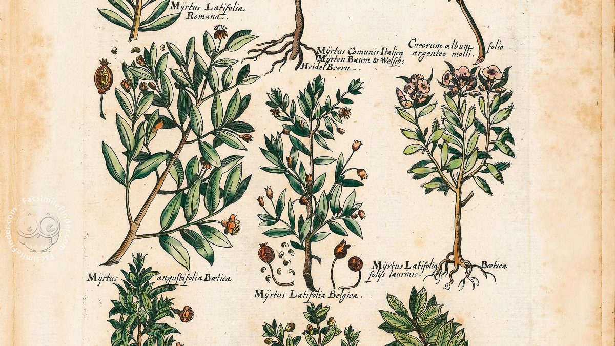 Historia Naturalis De Arboribus et Fructicibus